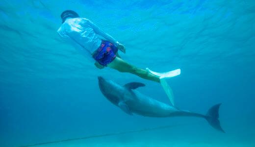 沖縄県「ルネッサンスリゾートオキナワ」でイルカと遊ぶ!予約方法をお得な割引情報を紹介する