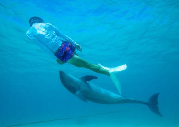 イルカと泳ぐ女性