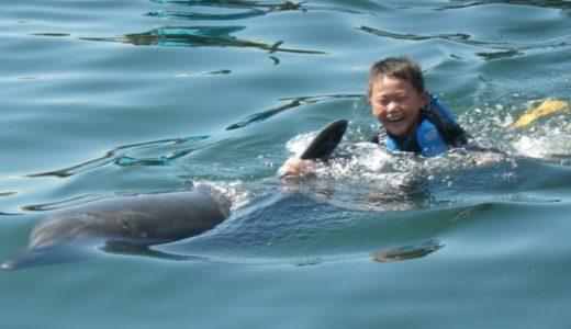 愛媛県伯方島にイルカと泳げる施設「ドルフィンファームしまなみ」がオープン!予約方法は?