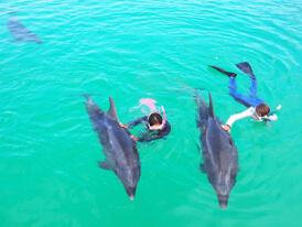 イルカと一緒に泳ぐ子供