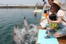 大分県津久見市にある「つくみイルカパーク」でイルカと触れ合う!割引情報や予約方法を紹介【おすすめ】