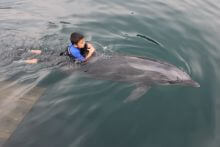 イルカと泳ぐ子供