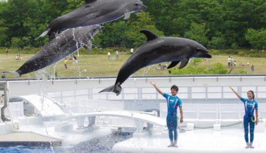 イルカの飼育員になるための専門学校おすすめベスト5|就職率が高いランキング【動物園・水族館で働きたい】