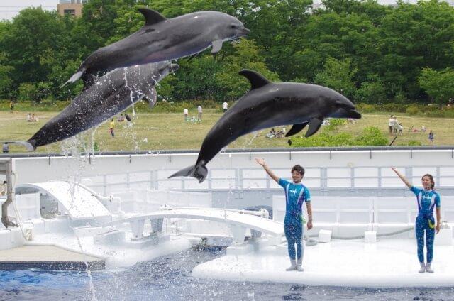 イルカの調教師になりたい
