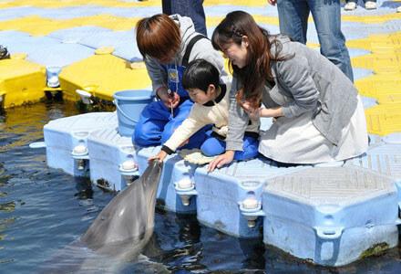 イルカと触れ合う子供