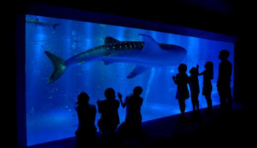 【石川】飼育員がこっそり教える「のとじま水族館」のお得な割引券!クーポンチケットを使って安く入場しよう