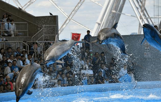 ジャンプする名古屋港水族館のイルカ
